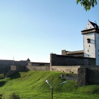 крепость :: linnud