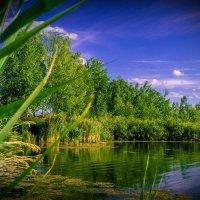 в прищуренных глазах сияет лето... =) :: Александр Абакумов