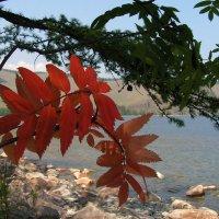 Скоро осень :: Рада Селезнёва