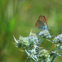 Бабочка :: Davit Petoyan