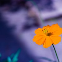 цветок :: ФОТОГРАФ КРАСНОДАР СЕРГЕЙ БОГДАНОВИЧ