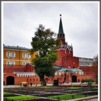 Александровский сад :: Ирина Князева