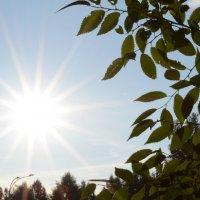 Солнечный день :: Юлианна Евгеньевна