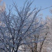 Зима** :: Анна Лавренко