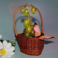 про виноград :: Lena