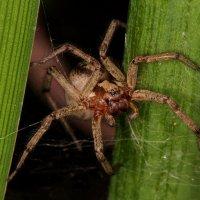 мой дворовой паук :: Андрей Волгоградский