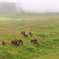 ...ходют кони... :: Ольга Нарышкова