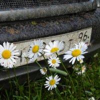 полевые цветы :: Сергей Макеров