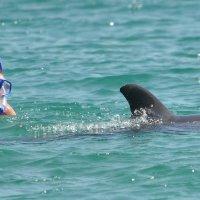Ныряльщик с дельфином. :: Виктор Евстратов