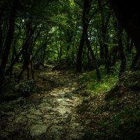 В лесах Черногории :: Александр Антонович