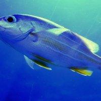 Рыбка :: Ростислав