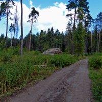 Дорога через вырубку :: Рднасклеа Вонелыпаз