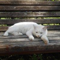 По-нашему, по-кошачьи! :: Настасья Мерчуткина-Щукина