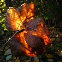 Осенний жар :: veilins veilins