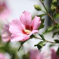 Городские цветы :: Vladimir 070549