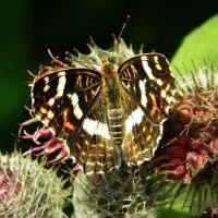 Бабочка :: Ольга Исакова