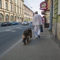 Шагая по Гороховой... :: Владимир Питерский