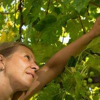 Девушка и виноград :: Светлана Фомина