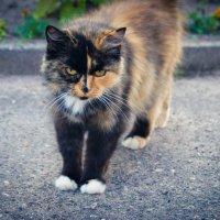 кошка :: Виктория Альшанец