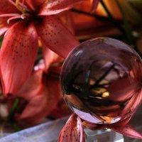 В мире цветов так тепло и прохладно... :: Галина Стрельченя
