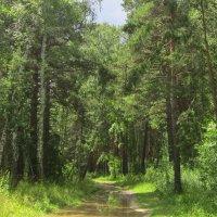 Лесные тропы . :: Мила Бовкун