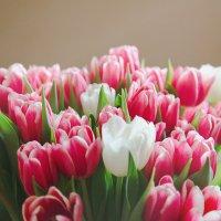 Flowers :: Екатерина Щёголева
