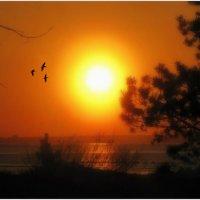 Птички в закате :: Ирина Лебедева