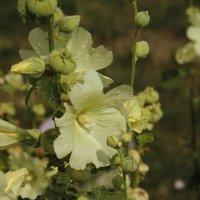 Цветы из Пощупово :: esadesign Егерев
