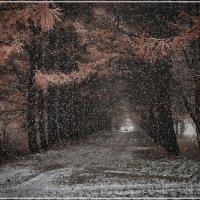 Первый снег :: Владимир Белозеров