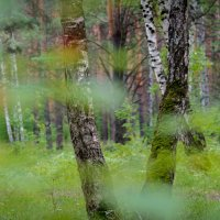 Лес :: Artem72 Ilin