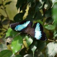 Выставка бабочек в Вене :: Михаил Сбойчаков
