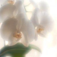 ...орхидея... :: Андрей Гр