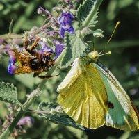 Про бабочек :: Владимир Самсонов