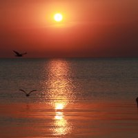На закате :: Ольга Князева