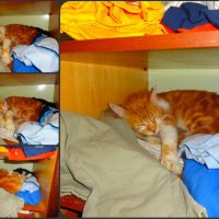 Тёплые коты :: Андрeй Владимир-Молодой