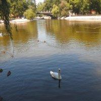 В парке. :: Наталья