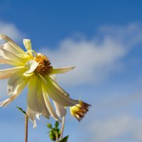 Цветок №9 :: Сергей Анисимов