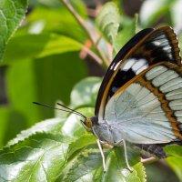 Бабочка прелестница:) :: Тамара Морозова