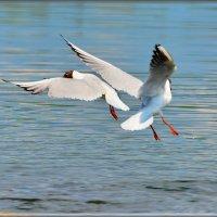 воздушный вальс :: linnud