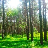 наш лес... :: Сергей Авд