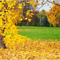 Скоро листопад :: Андрей Куприянов