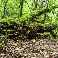 лес в городе :: Владимир Любавин