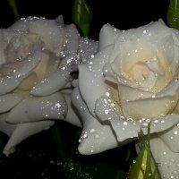 белые розы :: дарья прекрасная