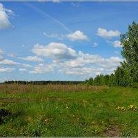 на краю поля :: Сергей Швечков