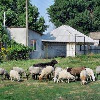 Шашлык гуляет по селу... :: Тамара (st.tamara)