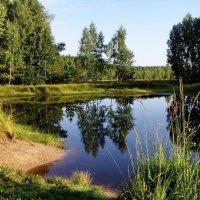 Лесное озеро. :: Лесо-Вед (Баранов)