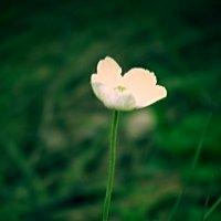 арт-цветочек))) :: Larisa ^_^