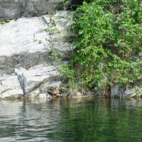 Горный парк Рускеала. Утка с выводком :: Елена Павлова (Смолова)