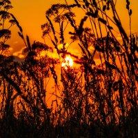 Закат над лесом. 5 августа 2014 год. :: Анатолий Клепешнёв