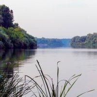 Река утром! :: Юрий Стародубцев
